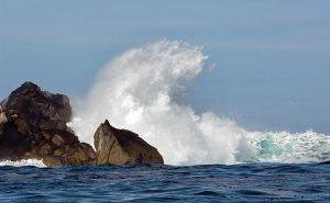 Photo: Carrie Vonderhaar, Ocean Futures Society