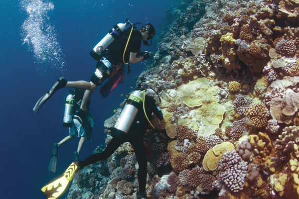 Scientists examine corals on Micronesian wall. Photo: Advanced Imaging and Visualization Laboratory, WHOI - Maryann Kovacs