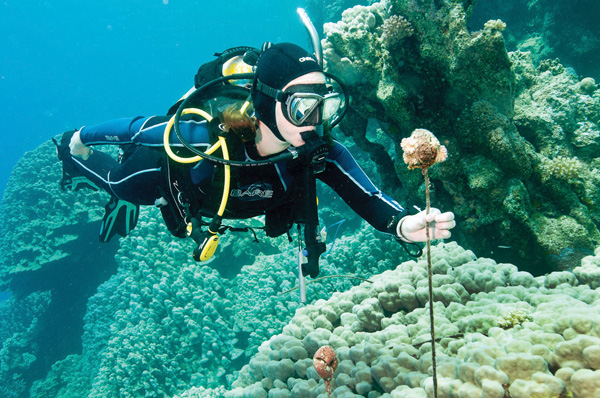 Angela Richards Donà inspects a tagged coral  at Marsa Alam, Egypt. Photo: Advanced Imaging and Visualization Laboratory, WHOI - Maryann Kovacs