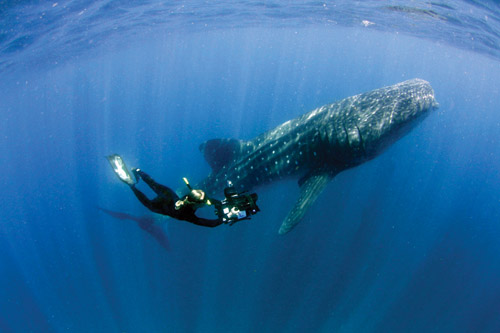 Becky filming whale shark Large