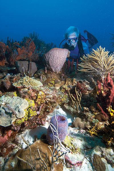 Photo: Richard Murphy, PhD, Ocean Futures Society